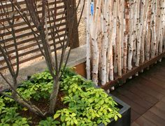 ROOFTOP GARDENS | High Style Roof Garden | Chicago Specialty Gardens