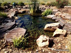 Small Natural Swimming Pool/Pond
