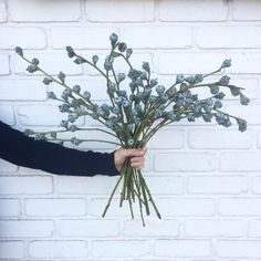 Silver bells are actually Eucalyptus pods! They are silver in color and stripped of all greens. They are the perfect addition to any wintery bouquet and their seasonal name doesn't hurt either