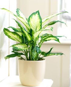 Zimmerpflanzen Poisonous houseplants - 20 poisonous plants you should know # easy-care indoor House Plants Decor, Plant Decor, Easy House Plants, Container Plants, Container Gardening, Balcony Gardening, Urban Gardening, Low Maintenance Indoor Plants, Decoration Plante