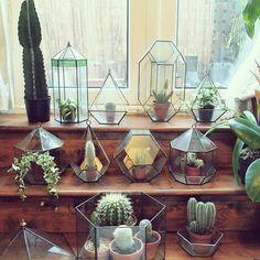 kaktusfest