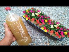 Portulaca Flowers, Hollyhocks Flowers, House Plants Decor, Plant Decor, Common Garden Plants, Bottle Garden, Succulent Gardening, Planting Roses, Garden Crafts