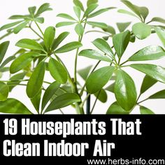"These several plants were in fact extremely beneficial to air quality, and ""filter"" the air through their photosynthesis process."