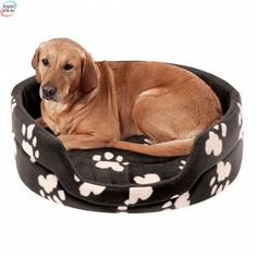 Offer Dog Bed at Wholesale Price. Buy Wholesale Dog Accessories at BigBuy Dog Pillow Bed, Dog Bed, Cushion Pillow, Elizabeth Arden Flawless Finish, Fluffy Cushions, Dog Accessories, Happy Dogs, Pet Care, Dog Bowls