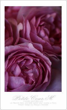 2014・01・23 薔薇 イブカルマン