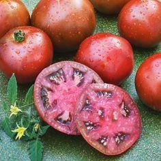 2 Black Prince Heirloom Tomato 2015
