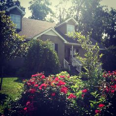 Landscaping front yard, roses