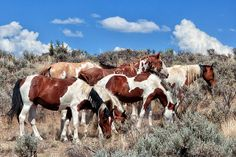 """""""Mustangs Roaming Free"""". Band of feral horses thrive in southern Oregon's outback. Prints available for sale. ©Kathleen Bishop 2013-2014."""