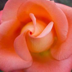 Valentine's Day Card | @FairMail - Fair Trade Cards | Pink Flower, Rose Valentine Day Cards, Fair Trade, Pink Flowers, Valentine Ecards, Rose Flowers