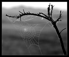 Spiderweb                                                                                                                                                                                 More