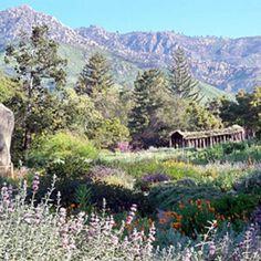 Santa Barbara Botanic Garden Hike