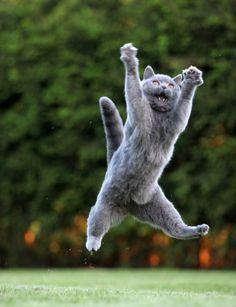 いくつになっても元気だ。 威嚇するほど、 ジャンプ力もすごいだろ。