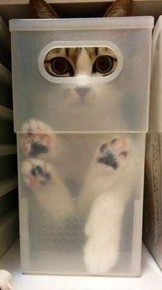 Kitties love their boxes