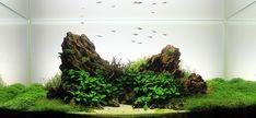 dragon stone iwagumi OHKO STONE - Aquascape