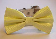 Lemon Wedding Dog Bow Tie -Lemon Wedding Dog Collar- Dog Bow tie, Pet Wedding Accessory, Lemon Wedding idea, Dog Lovers