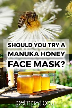Manuka Honey Face Mask: Should You Try One?  #manukahoney #honey #manuka #bees #beekeeping #pets #animals #garden #gardening #beekeeper #facemask #beauty #health Animal Nutrition, Pet Nutrition, Manuka Honey Face Mask, Beekeeping Equipment, Beekeeping Supplies, Beekeeping For Beginners, Farm Pictures, Pet Organization, Backyard Beekeeping