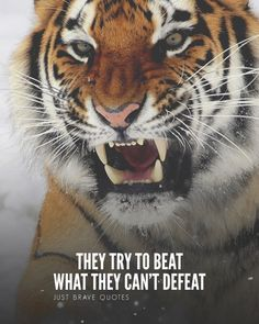 How many times do they need to try to understand that they simply can't defeat unstoppables? Tiger Quotes, Lion Quotes, Brave Quotes, Animal Quotes, Fearless Quotes, Encouragement Quotes, Wisdom Quotes, Motivational Quotes For Success, Inspirational Quotes