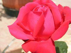 Rosa- 2004 - OLYMPUS OPTICAL CO.,LTD