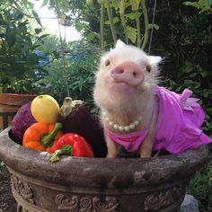 Good Morning! It's going to be a great day when you get to pick your school snack from the garden! #veganfundays #Priscilla  #happy_pet #petsmiles #tbt