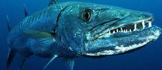 Hilton Head Charter Fishing | Outcast Fishing