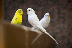 A few parakeets that seemed to cause most of the consternation were swiftly removed and the birds that remain are well-liked by employees, a System spokesperson said.