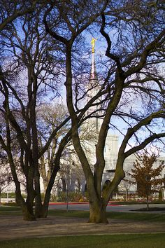 I love being LDS -  Sacramento Temple through the Oak Trees / http://www.mormonproducts.net/?p=575