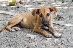 Read This When You Feel Like Your Dog Is Not Making Progress Fast Enough – AngusPost