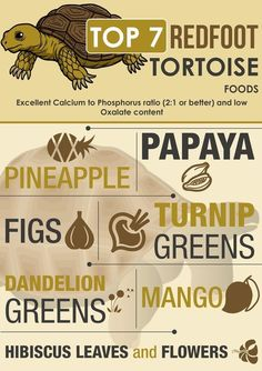 Russian Tortoise Diet Guide / Helpful Tips And Tricks Tortoise Food, Tortoise Habitat, Sulcata Tortoise, Tortoise Care, Turtle Habitat, Tortoise Turtle, Terrarium, Red Footed Tortoise, Tortoise Enclosure