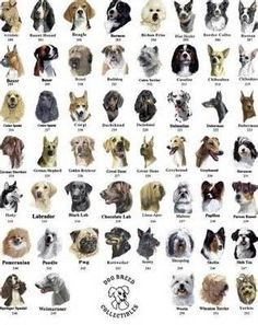 How Many Kinds of Dogs are There?