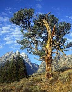 Wyoming - majestic Jackson Hole