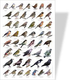 Vente Poster nature oiseau - Achat Nature