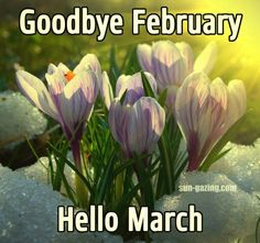 Goodbye February, Hello March