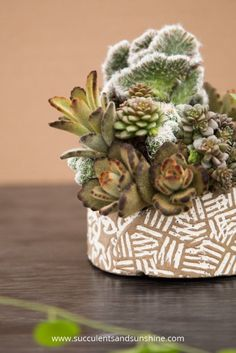 Gorgeous pottery by Susan Aach and succulent arrangement by The Succulent Perch