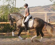Spectacular baroque PRE for sale!!! Logrono Spain, Rioja Spain, Horse Names, Horses For Sale, Horse Pictures, Horse Breeds, Dressage, Baroque, Equestrian