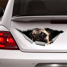 Funny car decal pug, pet decal, #pug sticker