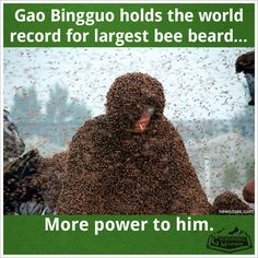 Thursday Fun Fact 8-13 - Groennfell Meadery - Gao Bingguo holds the world record for the largest bee beard... More power to him.