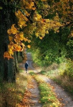 Forest Path, Forest Road, Autumn Scenery, Foto Art, Amazing Nature, Autumn Leaves, Countryside, Paths, Nature Photography