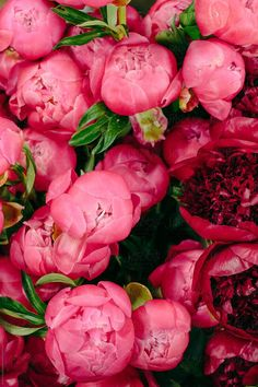 Ideas for flowers arrangements red peonies Amazing Flowers, Pink Flowers, Beautiful Flowers, Exotic Flowers, Fresh Flowers, Purple Flowers, Pink Roses, Flores Wallpaper, Pink Wallpaper