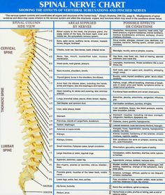 ...problems and their possible sources if nerves become pressured by the spine…http://do-yoga.co.uk/2012/12/28/is-your-posture-effecting-your-nerves/