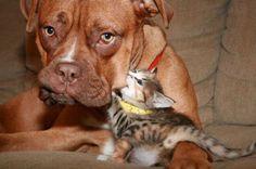 O sa va placa aceste poze cu animale amuzante