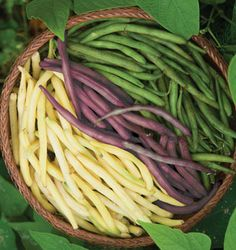Bean Seeds - Filet, Italian, Lima, Snap and Soybean, Vegetable Seeds at Burpee.com
