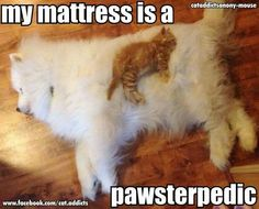 My mattress is a pawsterpedic