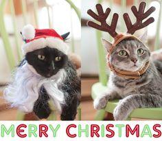 #CATS... #Santa and #Reindeer!...