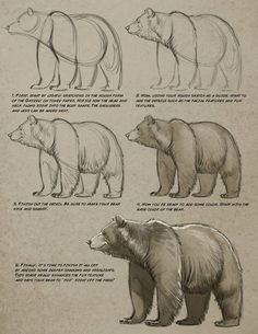 Pencil Drawing Techniques Art tutorials for all — anatoref: Bear by Aaron Blaise - Animal Sketches, Animal Drawings, Drawing Sketches, Pencil Drawings, Art Drawings, Drawings Of Bears, Bear Sketch, Bear Paintings, Poses References