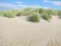 Dune with dune-grass