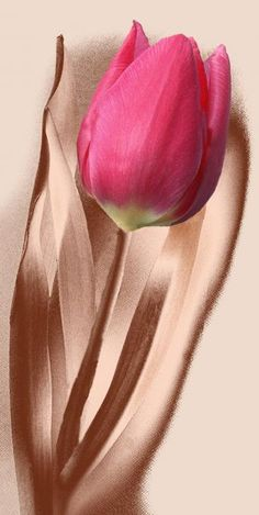 ~~ copper tulip ~~ two of my favorite things :)