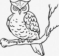 Desenhos para colorir: Coruja para colorir