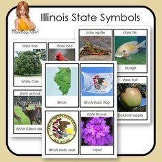 Illinois State Symbols Cards - 12 cards in this set