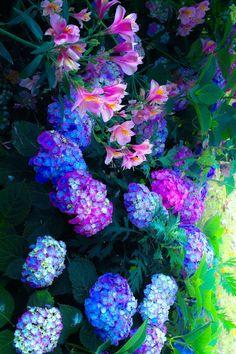 New amazing flowers pics every day, be the first to see them! Fantastic flowers will make your heart open. Love Garden, Dream Garden, Purple Garden, Garden Ideas, Amazing Flowers, Beautiful Flowers, Blue And Purple Flowers, My Secret Garden, Flowers Nature