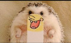 Who lives in a Pineapple Under the Sea? Hedgehog Spikeypants